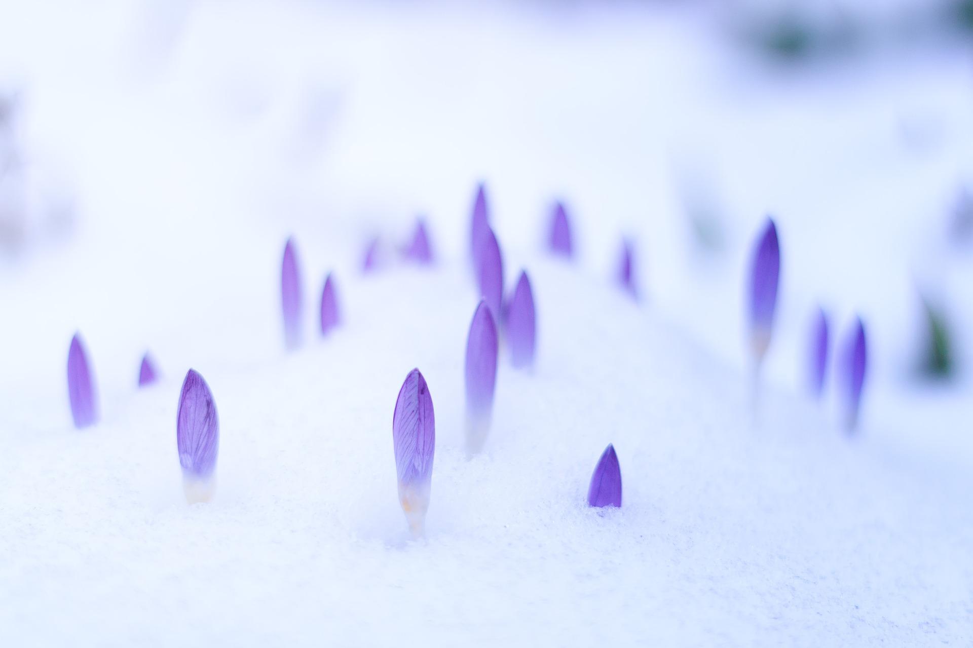 Tajemnice zimowego ogrodu